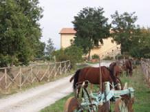 NOCE TORTA(Sarteano)