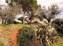 PODERE ORZALESI(Rosignano Marittimo)